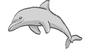 icon_dolphin